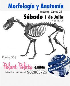 SEMINARIO MORFOLOGIA Y ANATOMIA CANINA – ALIANZ GANDIA – JULIO 2017 @ Centro Alianz Gandia