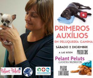 Ponencia Primeros Auxilios en Peluquería Canina - Alianz Gandia 2017 @ Centro Alianz Gandia