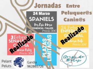Seminario Spaniels Alianz Gandia 2018 @ Centro Alianz Gandia