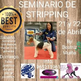 Seminario Stripping Alianz Alicante 2018 @ Centro Alianz Alicante