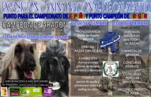Exposición Canina Nacional de Calatayud- Aragón 2018 @ Pabellón Feria de Muestras de Calatayud