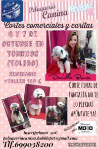 Seminario sobre Cortes comerciales y Caritas en el Centro Alianz Formación de Torrijos @ Peluquería Canina Bubble Pet